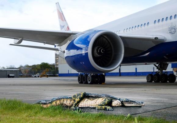 The Alligator (c)Press Association for British Airways